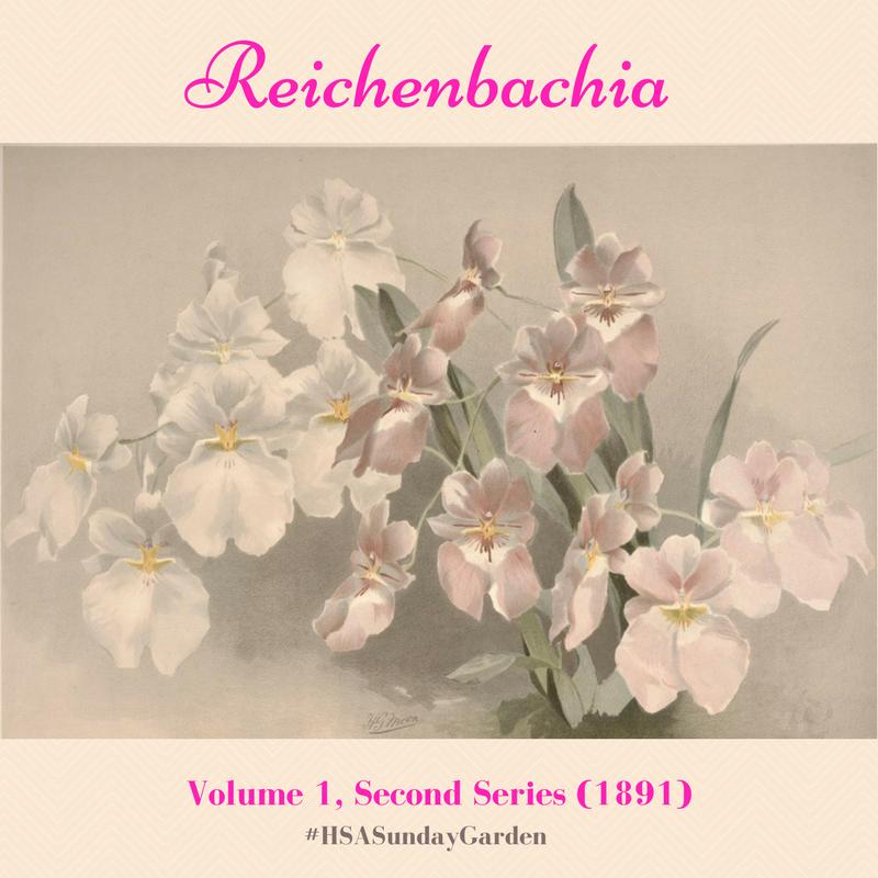 Reichenbachia